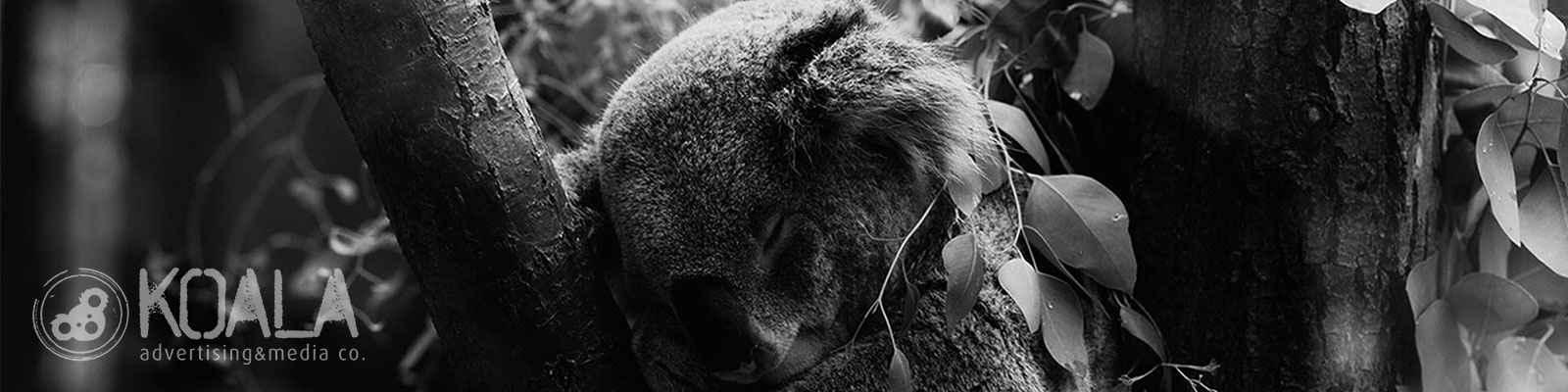 Koala Project banner fotograf